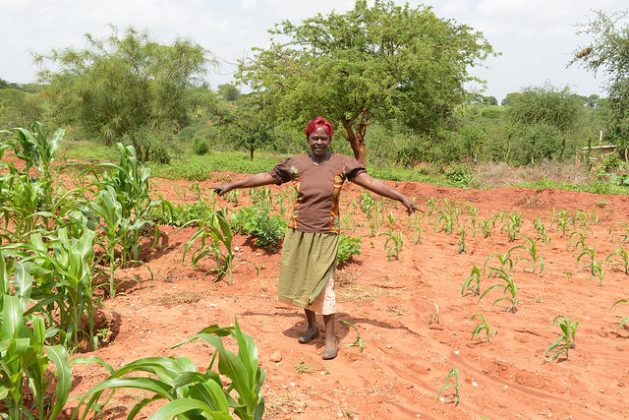 La agricultora keniata Veronicah Ngau muestra orgullosa su maíz de seis semanas interior (izquierda) y exterior (derecha) de pozos de cultivo, una técnica de adaptación que conserva el agua. Crédito: Ake Mamo/IPS
