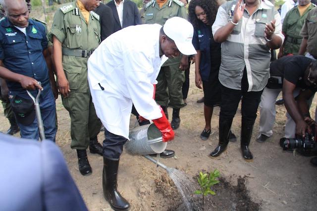 El presidente Edgar Chagwa Lungu plantaun árbol, en presencia del ministro de Tierras y Recursos Naturales. Crédito: Munich Advisors Group.