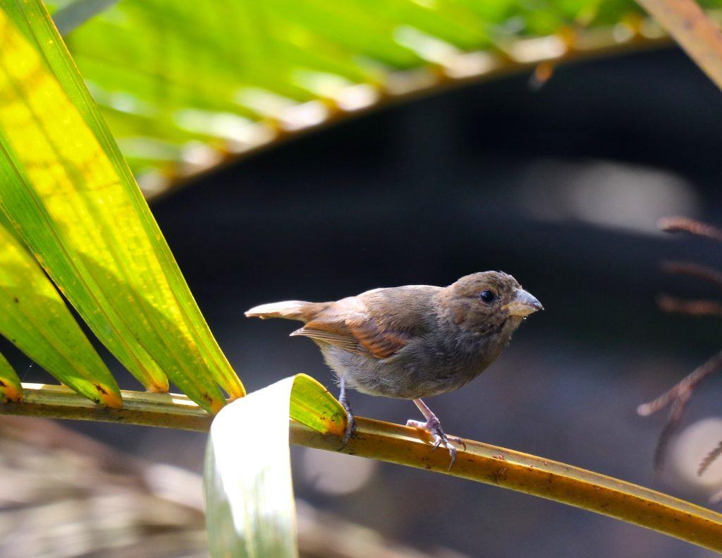 Santa Lucía tiene una riqueza excepcional de animales y plantas. En este país insular viven 2.000 especies autóctonas, de las cuales casi 200 no están en ningún otro lugar. Crédito: Desmond Brown/IPS.