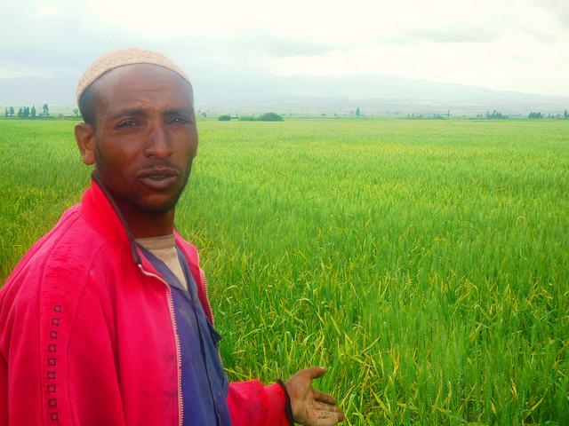Jundi Hajji, quien cultiva trigo en Etiopía, muestra su plantación. En Etiopía, 25 años de crecimiento sostenido en la agricultura redujo la pobreza rural a la mitad. Crédito:Omer Redi/IPS