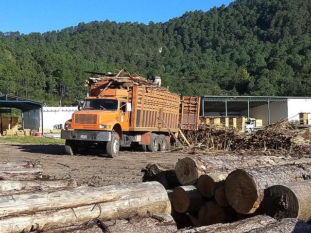 Un camión descarga troncos de pino en el aserradero de la comunidad forestal de Ixtlán de Juárez, en el sureño estado mexicano de Oaxaca, que como otros grupos locales en la Sierra Juárez, tiene un manejo sostenible de sus bienes comunales, incluidos los maderables. Crédito: Emilio Godoy/IPS
