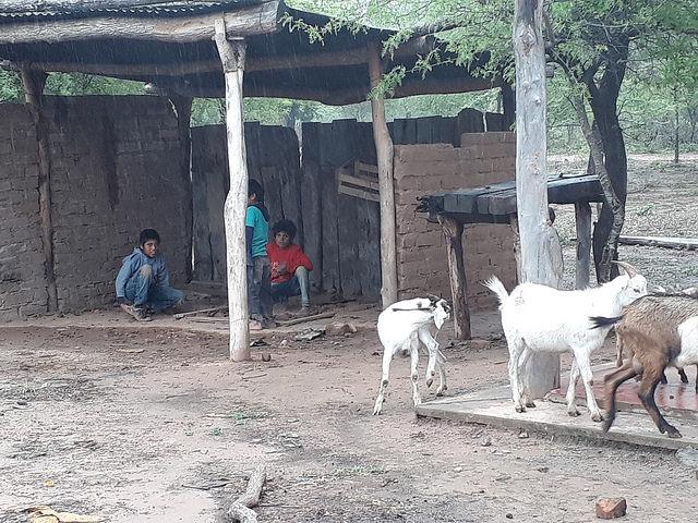 Cuatro niños juegan junto unas cabras en Lote 6, una comunidad indígena en la provincia de Salta, en el norte de Argentina. Se trata de una de las zonas más pobres del país, con la mitad de su población con sus necesidades básicas insatisfechas y donde la escasez de agua potable es el problema más grave. Crédito: Daniel Gutman/IPS