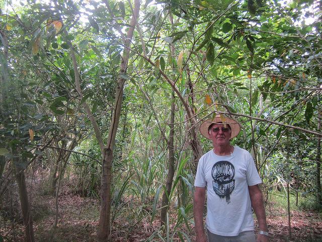 Geraldo Magela Gontijo, técnico de extensión agrícola desde hace 32 años, ante el bosque que plantó hace tres años ribera adentro, en la finca donde cultiva diferentes frutas. Crédito: Mario Osava/IPS