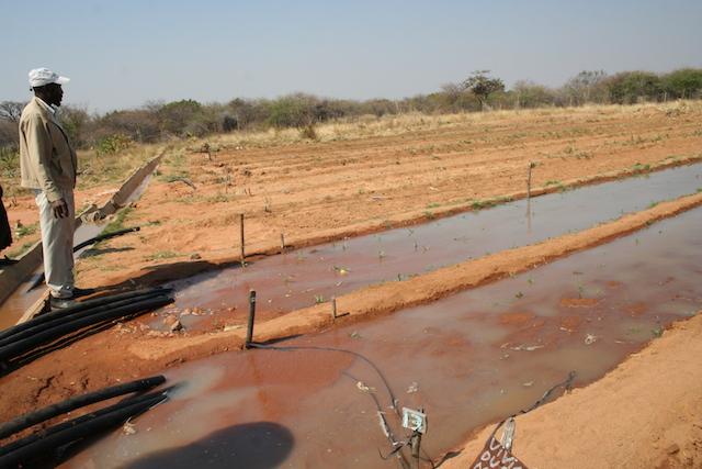 Miembro del Programa de Irrigación de Tjankwa, de ocho hectáreas, en el distrito de Plumtree, 100 kilómetros al oeste de Bulawayo, Zimbabwe. Crédito: Busani Bafana/IPS.
