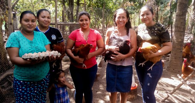 La producción avícola está dando esperanzas para migrantes deportadas a quienes conforman la Asociación de Mujeres Activas Trabajando Unidas por un Futuro Mejor, en el caserío Los Talpetates, del municipio de Berlín, en el oriental departamento de Usulután, en El Salvador. Crédito: Edgardo Ayala/IPS