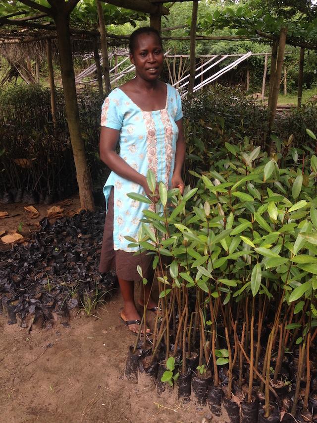 Rosemary Ackah forma parte del grupo de mujeres encargado de recoger las plántulas para crear un vivero de árboles del bosque de manglares. Crédito: Albert Oppong-Ansah/IPS