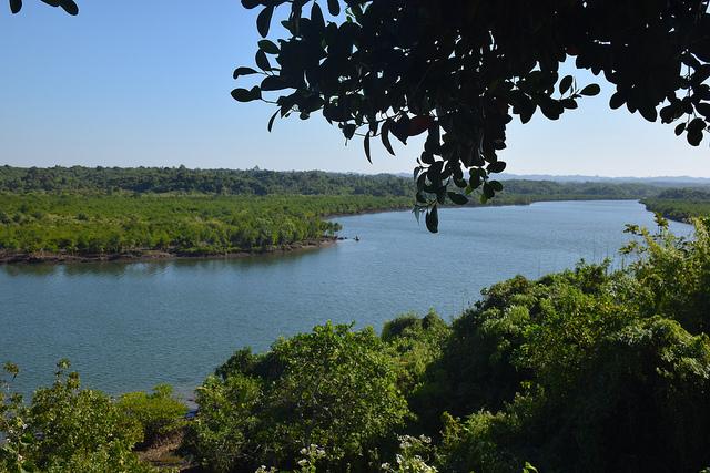 El bosque de manglares recuperado en Shwe Thaung Yan, en la región de Ayyerwady, en Birmania (Myanmar). Crédito: Stella Paul/IPS