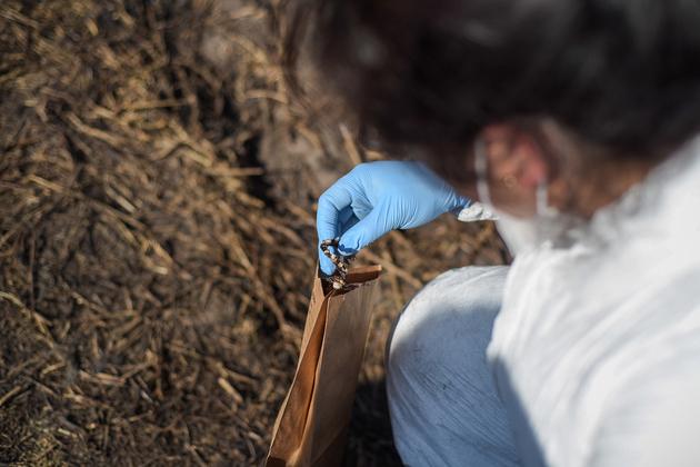 Una perito forense recoge restos óseos (dentadura) en el lugar de la explosión. Los cuerpos recuperados fueron enviados a una morgue privada en el municipio de Tula, a 15 km del Tlahuelilpan, lo que causó descontento entre los familiares. Crédito: Ximena Natera/Pie de Página