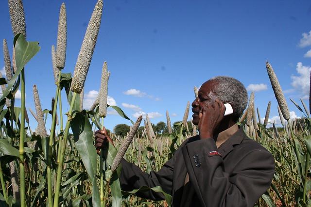 Phillip Tshuma, propietario de una pequeña finca en Zimbabwe, confía en la información meteorológica a través de su teléfono móvil, para mejorar su cultivo de maíz. Crédito: Busani Bafana/IPS