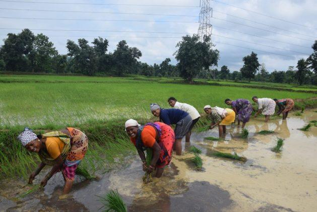Jam Bai (segunda izda con sari rojo), perteneciente al pueblo indígena kawar, siembra retoños de arroz en su arrozal, ayudada por mujeres de su familia y vecinas. Después de años de lucha, ahora ella es oficialmente propietaria de la tierra que cultiva en Korchi, una aldea del distrito de Gadchiroli, en el centro occidental de India. Crédito: Stella Paul / IPS