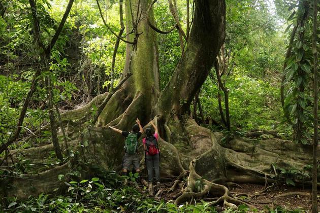 Parque Nacional Corcovado, Costa Rica. Crédito: Presidencia de Costa Rica
