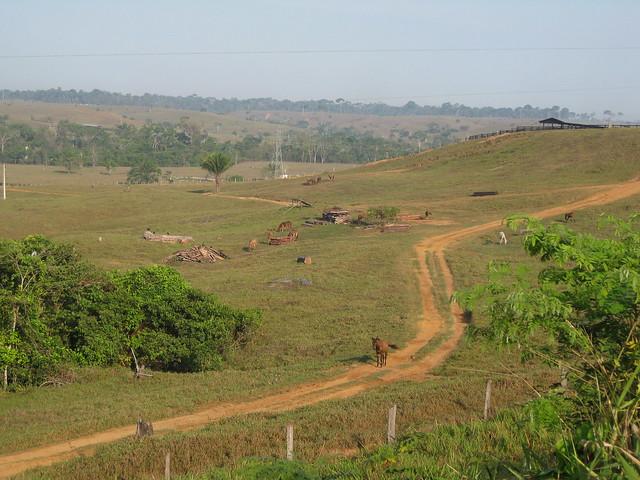 Área deforestada en el estado amazónico de Acre, donde en los años 70 y 80 se talaron grandes extensiones de bosques para la cría ganadera muy poco productiva. El estado, sin embargo, es conocido por la preservación forestal, gracias a la lucha de Chico Mendes, líder de los extractores de caucho natural, asesinado en 1988. Crédito: Mario Osava/IPS