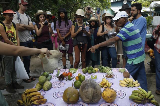 Gonzalo Lebrén muestra algunos frutas cultivados en forma orgánica en la finca Gonzalo, de la Cooperativa de Crédito y Servicios Amistad con Los Pueblos, en el municipio de Marianao, uno de los que conforman La Habana, la capital de Cuba. Crédito: Jorge Luis Baños/IPS