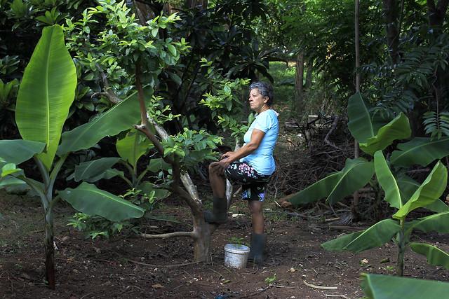 La agricultora Idalia María González observa sus cultivos ecológicos en la finca La Cañada, uno de los sitios visitados por los participantes al VII Encuentro Internacional de Agroecología, Agricultura Sostenible y Cooperativismo, en Arroyo Arenas, en la periferia de la capital de Cuba. Crédito: Jorge Luis Baños/IPS