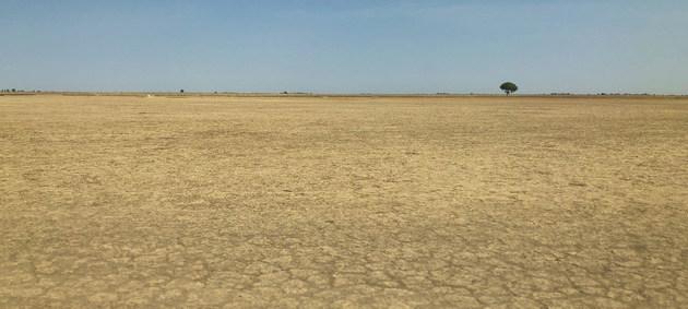 El cambio climático y el uso insostenible de la tierra contribuye a la desertificación en Camerún. Crédito: ONU