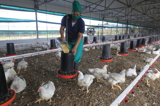 La política de género cubana en el sector agrícola elevó la participación de las mujeres dentro de un sector clave para la seguridad alimentaria