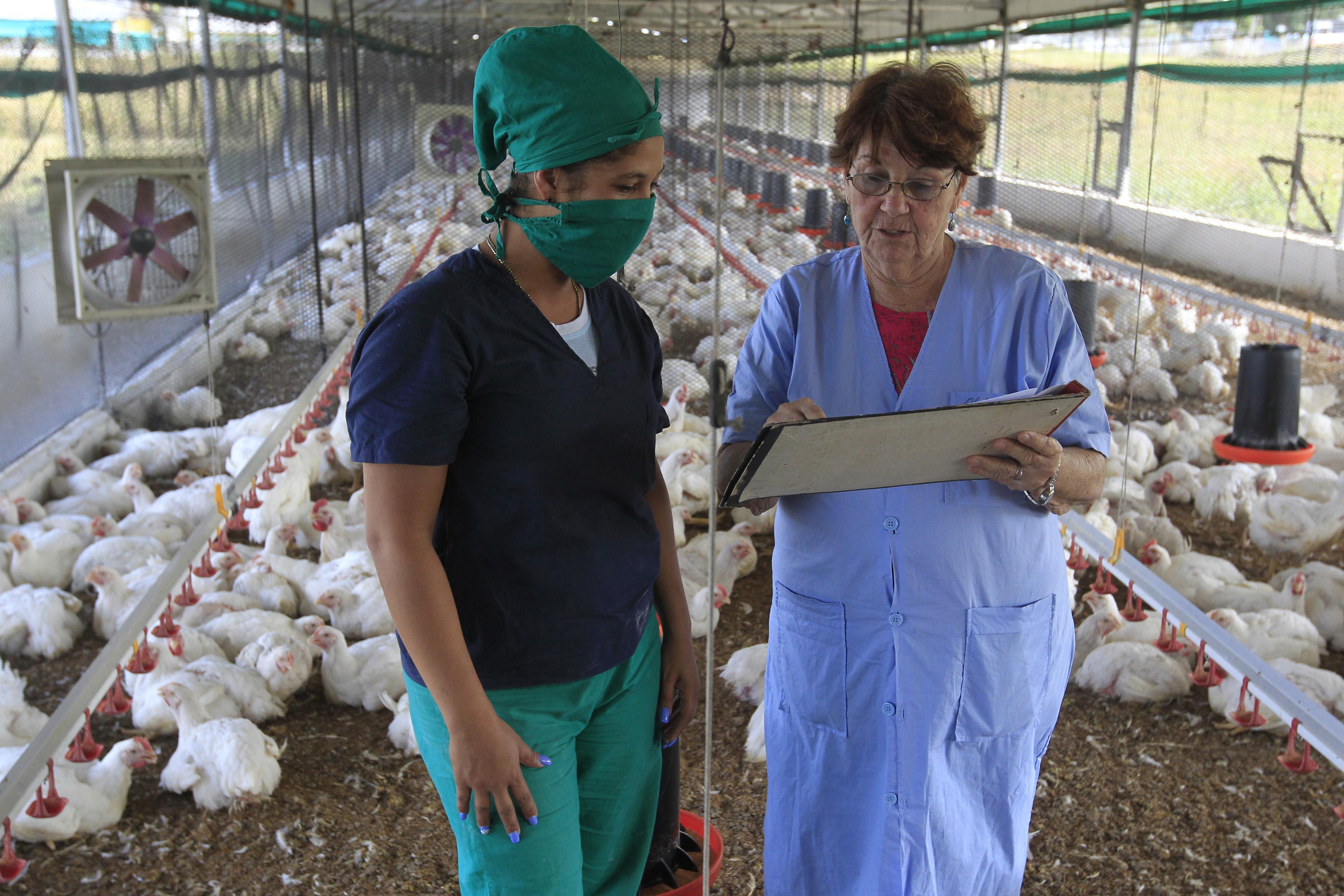 La auxiliar de investigación Daniubis Abad (I) conversa con la bióloga Ofelia Godínez, en una nave del Instituto de Investigaciones Avícolas (IIA), perteneciente al Ministerio de Agricultura, que es pionero en el país en implementar una estrategia de género. Municipio Boyeros, La Habana, Cuba.17 de diciembre de 2019. Crédito: Jorge Luis Baños/IPS