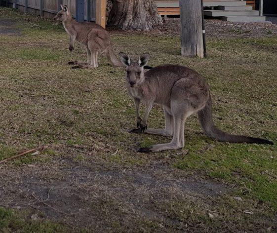 Los incendios forestales en Australia hicieron retroceder décadas de logros en materia de conservación, causando la extinción de gran parte de la flora y fauna nativa de Australia