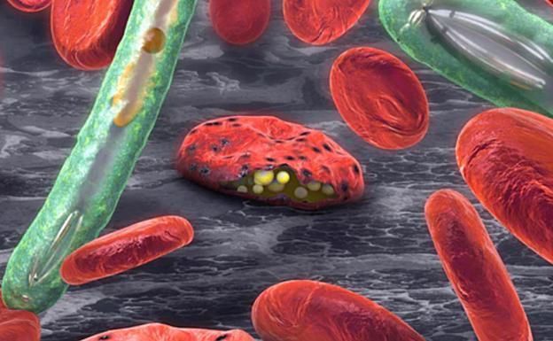La solución a la crisis del Covid-19 puede estar en el conocimiento acumulado en otros patógenos, como el de la malaria. Por eso es tan importante invertir en I+D+i y mirar más allá de nuestras fronteras, donde las epidemias aún son el pan de cada día