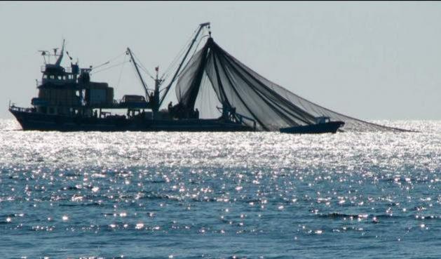 La sobrepesca amenaza los océanos y a su biodiversidad y para contenerla se considera esencial la eliminación de los subsidios y otros beneficios al sector pesquero, que se negocian con lentitud en la OMC. Foto: FAO