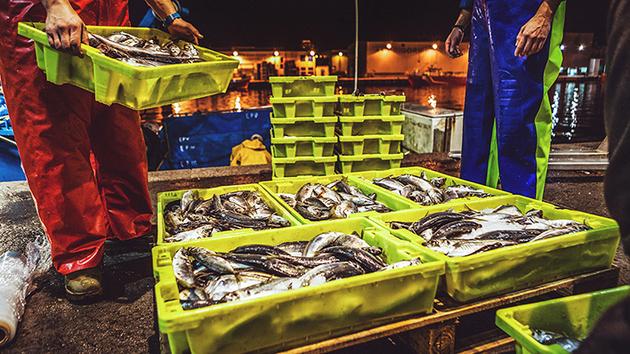 La pesca representa el sustento tradicional de muchas poblaciones de los países costeros del Sur global, en especial para los de Asia, que sobreviven con pocas ayudas estatales, al revés de lo que sucede en el Norte industrial. Solo en Asía hay 50 millones de personas que viven de la pesca, mientras en la Unión Europea son 450 000. Foto: OMC