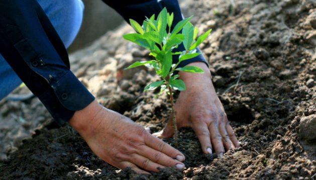 El programa mexicano Sembrando Vida incluye la restauración de los ecosistemas del país. Foto: Gobierno de México