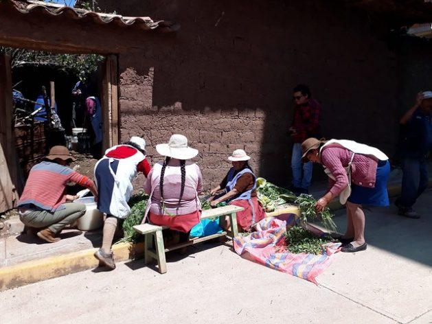 Campesinas quechuas del pueblo de Huasao, en el altiplano andino de Perú, cortan plantas repelentes de insectos, en el frente de la casa de Juana Gallegos, mientras dentro otras preparan la mezcla de biol, un abono orgánico líquido, que usan en sus cultivos de hortalizas. Foto: Mariela Jara/IPS