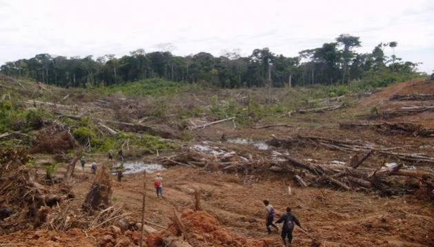 """La deforestación de la Amazonia no solo trae daños ambientales, sino que también afecta la salud humana. Un estudio analiza los problemas y actividades asociados con dicha práctica en la Amazonia brasileña, que dan lugar a lo que los autores llaman la """"tormenta perfecta"""" para la aparición y resurgimiento de enfermedades infecciosas."""