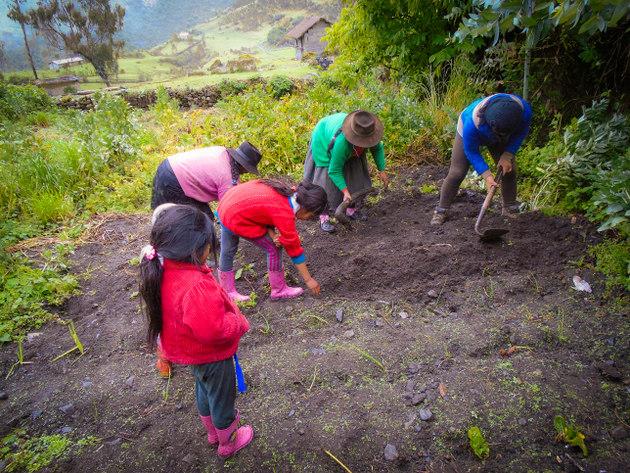 Las mujeres de varias comunidades altoandinas de Ayacucho, en Perú, tuvieron un papel muy activo en siembra y cosecha de agua, incluida la protección de las cabeceras de las fuentes de agua. En la imagen, un grupo de mujeres y niñas en una actividad comunitaria en Oroncoy, una aldea a unos 3200 metros de altura. Foto: Cortesía de Huñuc Mayu