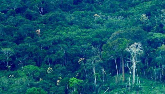 La destrucción de los bosques tropicales, como la selva amazónica, aumenta el riesgo de enfermedades nuevas y pandemias, por el contacto entre poblaciones humanas con animales que transmiten virus. Foto: Vihh / Flickr- Creative Commons 2.0