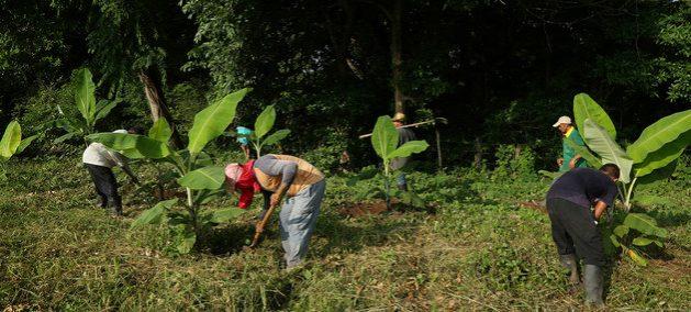 Miembros de la cooperativa Coompazcol, formada por exguerrilleros desmovilizados, trabajan en el campo. Desde que se firmó el acuerdo de paz entre la antigua guerrilla FARC y el gobierno han sido asesinados centenares de excombatientes y defensores de derechos humanos. Foto: Hisae Kawamori/ONU