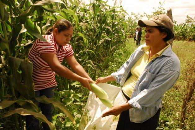 Las mujeres rurales contribuyen con la producción de alimentos en América Latina y el Caribe, realizan abundante trabajo no remunerado y su exposición a la pobreza puede crecer con la pandemia covid-19, alertó la FAO. Foto: Oxfam