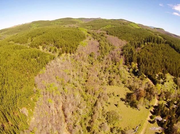 De acuerdo con el estudio, en el caso chileno, la forestación promovida resultó costosa y contribuyó escasamente a la eliminación del dióxido de carbono de la atmósfera. Foto: Cortesía de Cristian Echeverría