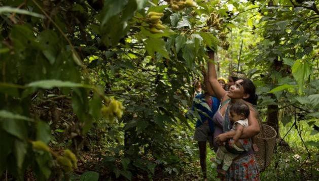 Un estudio encontró que en la Amazonia brasileña, contar con derechos de propiedad permite a los indígenas proteger la tierra de amenazas externas, lo que reduce significativamente la deforestación. Foto: Bruno Kelly/Amazônia Real-Creative Commons