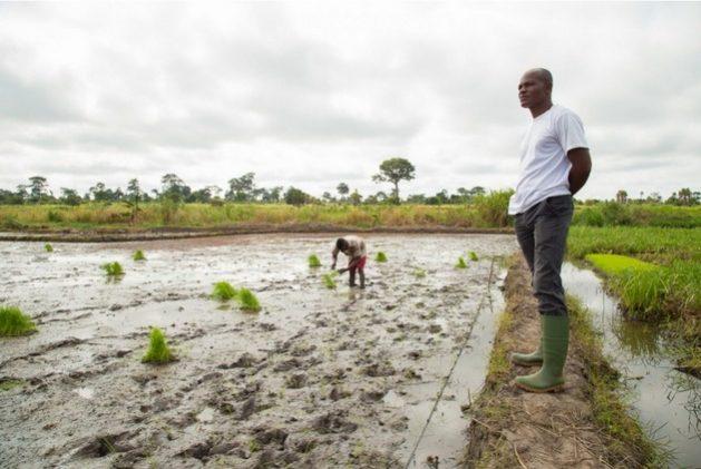 La agricultura es un sector altamente impactado por el cambio climático, con sus extremos de sequías e inundaciones, y objeto de financiamiento reivindicado por los bancos de desarrollo. Foto: Dasan Bobo/BM