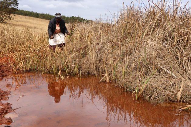 Sibonisiwe Hlanze es una de las 600 mujeres a las que se permite cosechar cañas del humedal de Lawuba, un municipio del pequeño país africano de Eswatini, el antiguo Suizilandia. Gracias a esta actividad gana lo suficiente para comprar insumos agrícolas. Foto: Mantoe Phakathi / IPS