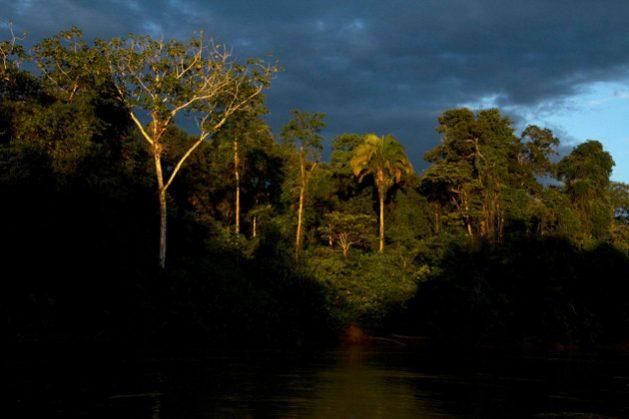 """El Panel Científico para la Amazonia pretende proponer políticas para evitar que esta región llegue a un """"punto de no retorno"""". Foto: Esteban Suárez/SciDev.net"""