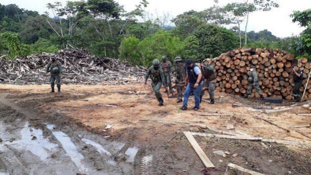 Tres aserraderos clandestinos ubicados en el cantón Arajuno, provincia de Pastaza, fueron desarticulados en un operativo realizado por el Ejército y la Unidad de Protección Ambiental de la Policía el 23 de julio de 2020 en Ecuador. Se retuvo madera de balsa. Foto: Policía Ecuador