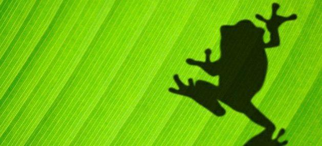 Hoja verde con sombra de una rana, simboliza lo que el pacto sobre biodiversidad 2021 busca preservar.