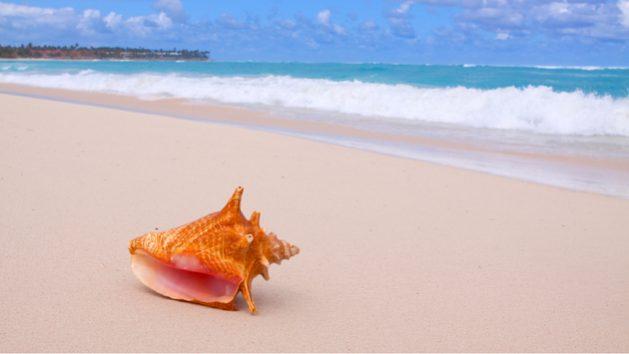 El caracol rosado, una especie icónica del Caribe y de carne muy apreciada en los mercados internacionales, representa una oportunidad para conservar el ambiente e incrementar ingresos de pequeños productores. Foto: Swetlana Wall/Unctad