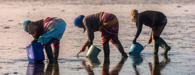 Mujeres recolectan almejas en una playa de Túnez. La acuicultura es vista como un recurso para incrementar los alimentos disponibles para la población mundial y bajar la presión sobre la pesca objeto de captura. Foto: Amine Landoulsi/FAO