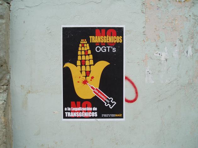 La legalización de maíces transgénicos en México, donde están prohibidos desde 2013 debido a un amparo, genera polémica. Foto: k t/Flickr, bajo licencia Creative Commons 2.0