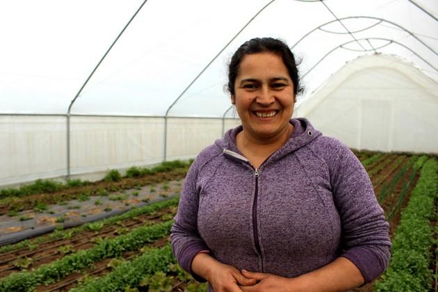 La agricultora Nancy, una de las beneficiarias del proyecto de Comunidades Mediterráneas Sostenibles en el municipio de San Nicolás, en Chile, en medio de un invernadero de cultivos agroecológicos. Foto: PNUD Chile