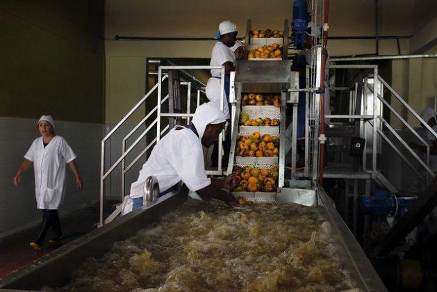 Dos operarios atienden el lavado de mangos en la pequeña fábrica de conservas La Primada, en la periferia de la ciudad de Baracoa, en la provincia de Guantánamo, en el este de Cuba. Autoridades internas calculan que más de 400 empresas estatales podrían quedar insolventes el primer año de la unificación monetaria iniciada en enero, lo que afectaría a 300 000 empleados. Foto: Jorge Luis Baños/IPS