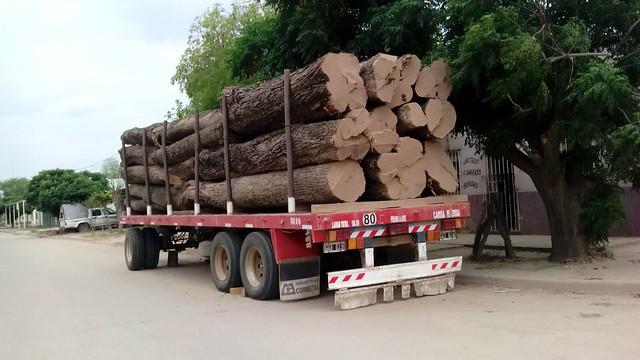 Un camión cargado con troncos de árboles nativos recién cortados en la localidad de Miraflores, en la provincia de Chaco, en el noreste de Argentina. Los bosques chaqueños son una fuente importante de recursos en una de las regiones con mayor pobreza del país y parte de la madera extraída proviene del desmonte realizado por productores agropecuarios. Foto: Daniel Gutman /IPS