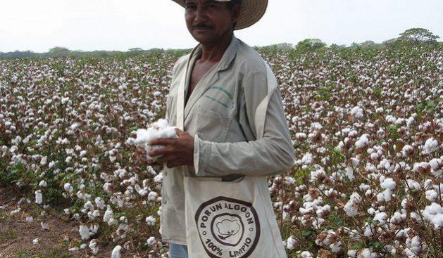 Los cultivadores de algodón en el municipio Ovejas, del norte colombiano, ya disponen de la conectividad necesaria para sostener las innovaciones en el programa de reconversión de cultivos en la zona. Foto: ONU Colombia