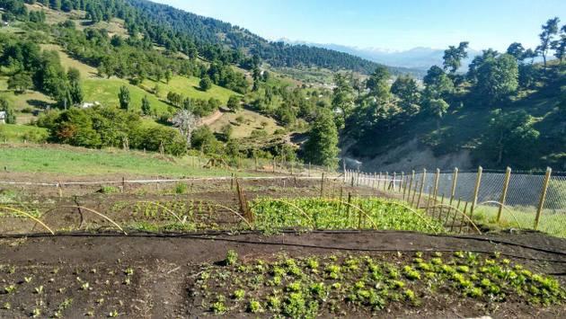 Un huerto en una ladera de la localidad de Montaña Pedregoso, respaldado por el proyecto GEF/PNUD que promueve una agricultura sostenible en sectores del secano mediterráneo del centro de Chile. Foto: PNUD Chile