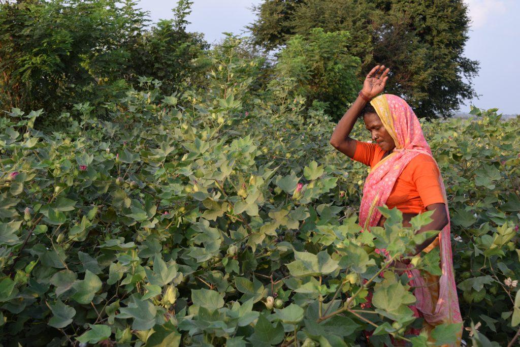 Sandhya Mohite, una pequeña cultivadora de algodón en la región de Yavatmal, en el estado de Maharashtra. El algodón es uno de los cultivos en los que ha funcionado el sistema de Precios Mínimos de Apoyo, pero ahora, según las nuevas leyes agrícolas del país, ya no se garantizará a los agricultores un precio mínimo en los productos, lo que ha llevado a algunos en ese estado al suicidio. Foto: Stella Paul /IPS