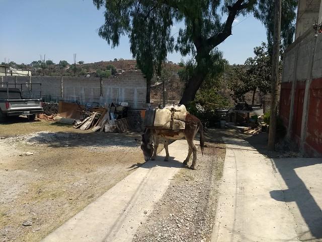 """La compra de bidones transportados por burro es la alternativa que les queda a los habitantes de Tehuixtitla y otros barrios de los cerros de la demarcación de Xoxhimilco, en el sur de la capital de México, cuando se acaba el agua de lluvia captada durante la estación húmeda y se demora el abastecimiento de los camiones cisterna, localmente conocidos como las """"pipas"""". Foto: Emilio Godoy /IPS"""