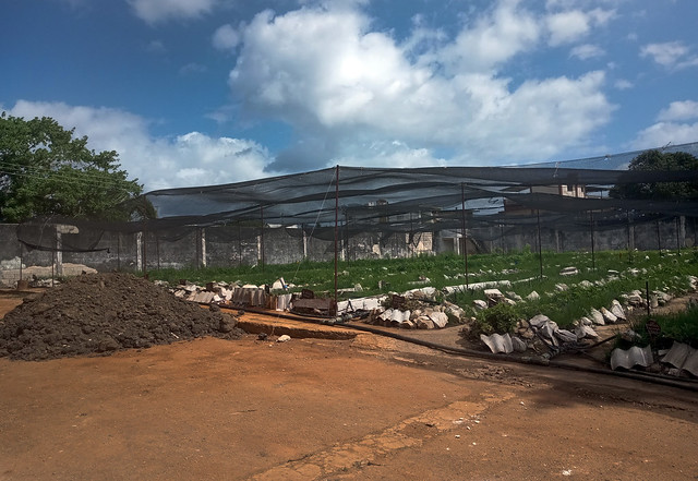 Un cultivo organopónico de la Unidad Básica de Producción Cooperativa (UBPC) Villa 1, donde se cultiva albahaca, perejil y orégano, entre otras variedades, en Guanabacoa, un municipio situado a unos ocho kilómetros de la capital de Cuba. Foto: Patricia Grogg / IPS